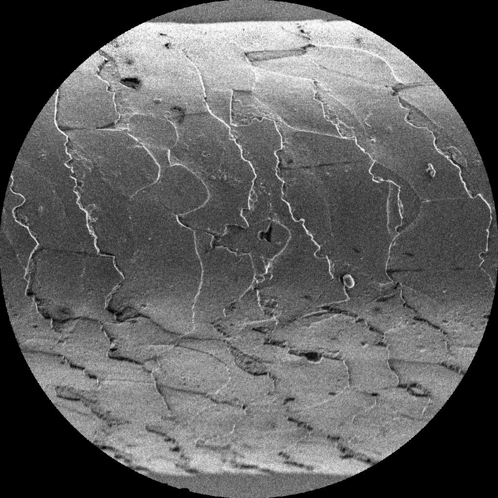 A képen egy hajszálról mikroszkóp alatt készült fekete-fehér árnyalatú felvétel látható.