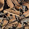 Tölgyfakéreg-rakés. A tölgyfakéreg is alkotója a hajcseppünknek.
